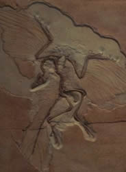 Archaeopteryx and Avian Evolution