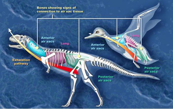 dinosaur-bird-evolution