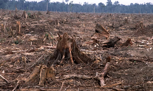 free market deforestation